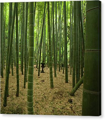 Giant Bamboo Forest With Stone Lantern, Japan Canvas Print