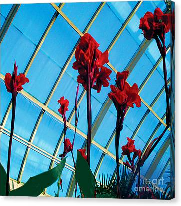 Giant Canna Lilly Canvas Print by David Klaboe