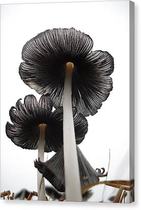 Giant Mushrooms In The Sky Canvas Print by Kent Lorentzen