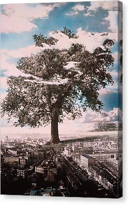 In-city Canvas Print - Giant Tree In City by Hag