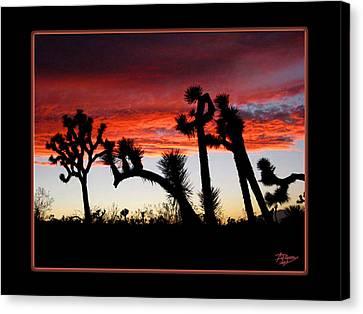 Giants Of Joshua Tree Ca Canvas Print