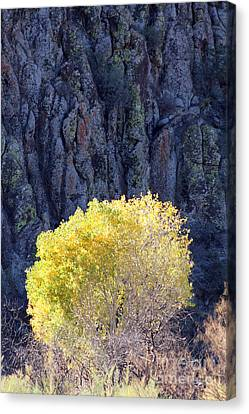Gilded Autumn Canvas Print
