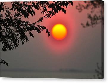 Fuschia Canvas Print - Gilded Sunrise Glow by Rebecca Sherman