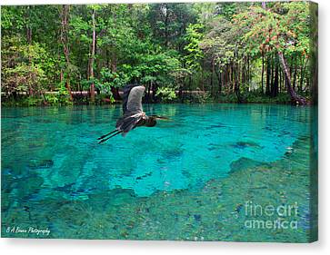Ginnie Springs Canvas Print