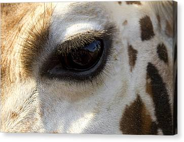 Canvas Print featuring the photograph Giraffe Eye by Carrie Cranwill