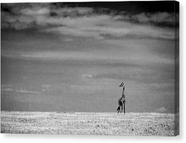 Giraffe Serengeti National Park Canvas Print