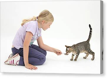 Girl Feeding Kitten From A Spoon Canvas Print by Mark Taylor
