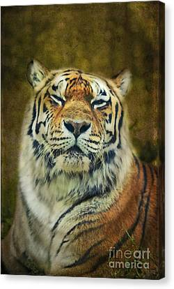 Give Me Your Tender Look Canvas Print by Aimelle