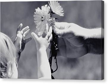 Giving Her Flowers Sweet Baby Hands Canvas Print by Tracie Kaska