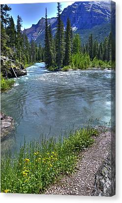 Glacier Park Stream Canvas Print by Don Wolf