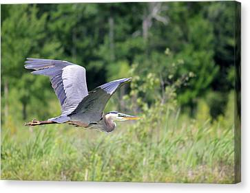 Glide Canvas Print by Brook Burling
