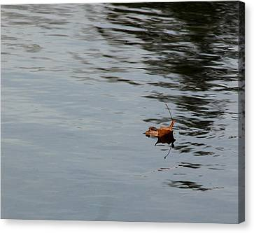 Gliding Across The Pond Canvas Print by LeeAnn McLaneGoetz McLaneGoetzStudioLLCcom