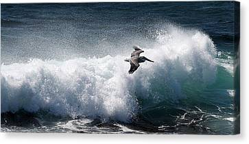 Canvas Print featuring the photograph Gliding Pelican by Michael Rock