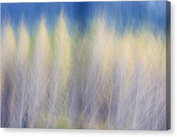 Glimpse Of Trees Canvas Print by Carol Leigh