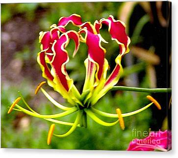 Gloriosa Lily Canvas Print by Rod Ismay