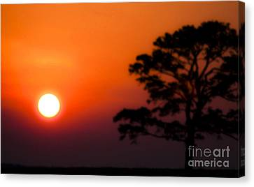 Glorious Evening Canvas Print by Kim Henderson