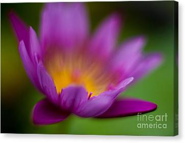 Glorious Lily Canvas Print by Mike Reid