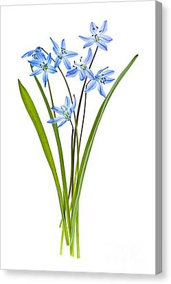 Blue Spring Flowers Canvas Print by Elena Elisseeva