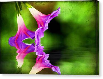 Glory Reflection Canvas Print by Darren Fisher