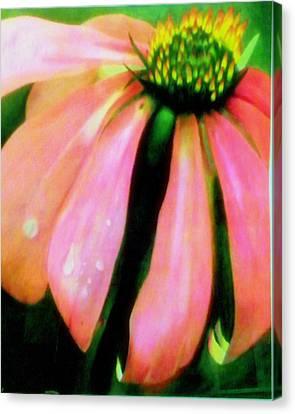 Glow Canvas Print by Amity Traylor
