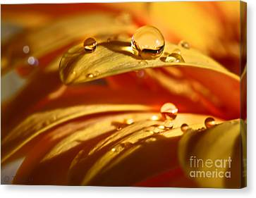 Glowing Amber Canvas Print by Tracy  Hall