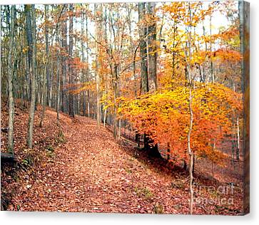 Canvas Print featuring the photograph Glowing Beeches by Gretchen Allen