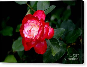Glowing Canvas Print by Living Color Photography Lorraine Lynch