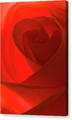 Glowing Red Canvas Print by Carolyn Dalessandro