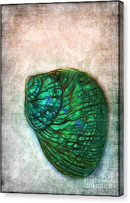 Glowing Seashell Canvas Print by Judi Bagwell