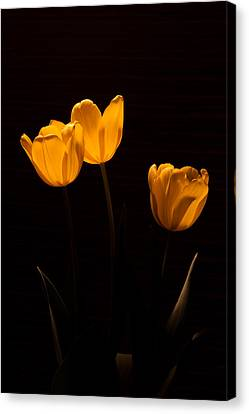 Canvas Print featuring the photograph Glowing Tulips by Ed Gleichman