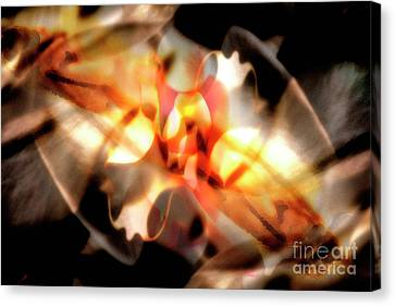 Gmelina Explosion Canvas Print by Keith Kapple