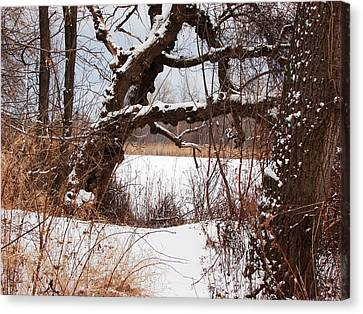 Gnarled Tree By Lake Chipican Canvas Print