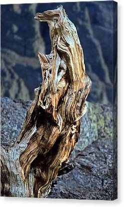Gnarled Tree Stump Canvas Print by Rod Jones