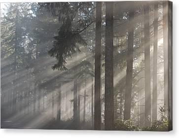 Gods Rays Canvas Print
