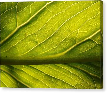 Canvas Print featuring the photograph Going Green by Gerald Strine