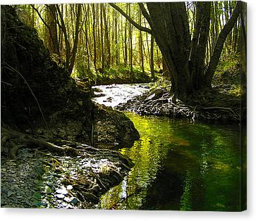 Gold River Canvas Print