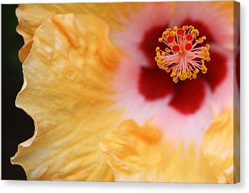 Canvas Print featuring the photograph Golden And Crimson Hibiscus by Donna Smith