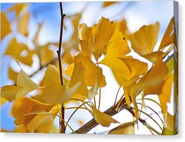 Golden Autumn Canvas Print by Kaye Menner
