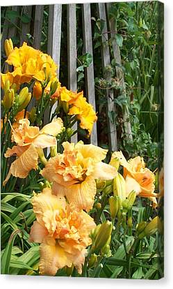 Golden Blossoms Canvas Print by Sandy Collier