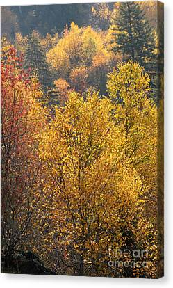 Smokey Mountain Drive Canvas Print - Golden Days by Gary Suddath