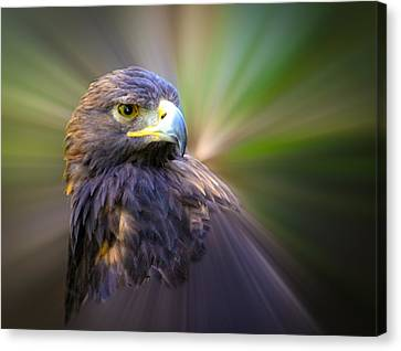Golden Eagle Fade Canvas Print by Steve McKinzie