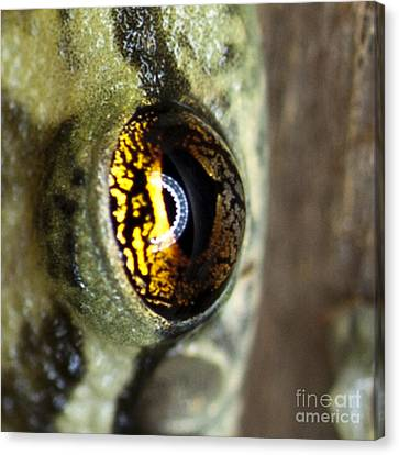 Canvas Print featuring the photograph Golden Eye by John Burns