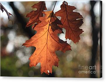 Golden Fall Leave's Close Up Canvas Print