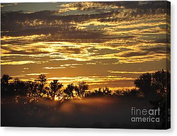 Canvas Print featuring the photograph Golden Fog by Tamera James