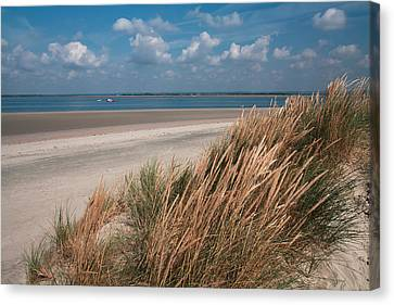 Canvas Print featuring the photograph Golden Grasses by Shirley Mitchell