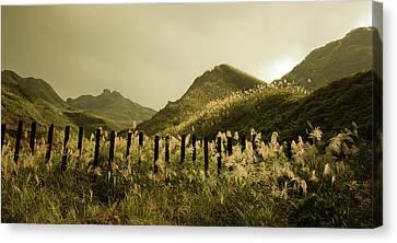 Golden Hills Canvas Print by Tnwy