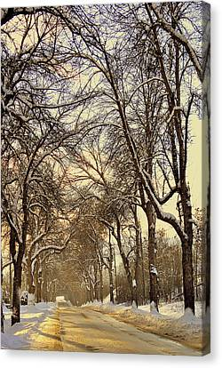 Canvas Print featuring the photograph Golden Hues by Michael Dohnalek