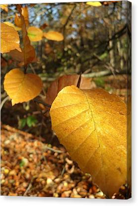 Golden Leaves Canvas Print by Michael Standen Smith