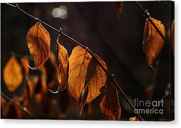 Canvas Print featuring the photograph Golden Leaves by Vilas Malankar