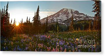 Golden Meadows Of Wildflowers Canvas Print by Mike Reid